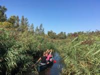 kanoën in de Biesbosch